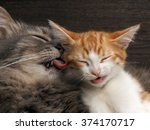 Stock photo cat washes language of a small kitten portrait of a big cat lovely loving relationship care and 374170717