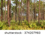 scenic pinelands in johnathan... | Shutterstock . vector #374207983