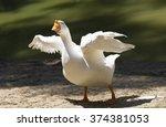 portrait of a white wild goose. ... | Shutterstock . vector #374381053