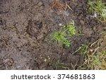 Footprint In The Dirt. Brown...