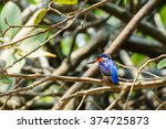 Small photo of Alcedo Vintsioides: A Madagascar Kingfisher resting on a branch