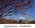 mt.fuji and japanese apricot... | Shutterstock . vector #37483696