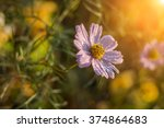 Sunlit Flower In The Garden In...