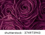beautiful roses for background  | Shutterstock . vector #374973943