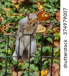 A Squirrel In The Park On The...