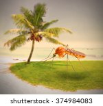 Mosquito On Tropical Beach ...