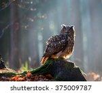 eurasian eagle owl  bubo bubo ... | Shutterstock . vector #375009787