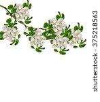 white pear flowers branch...   Shutterstock . vector #375218563