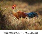 sri lankan national bird ceylon ... | Shutterstock . vector #375260233