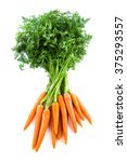 bunch of fresh carrots with...   Shutterstock . vector #375293557