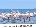 close view of the flamingos in... | Shutterstock . vector #375400387