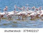 flamingos at the walvish bay in ... | Shutterstock . vector #375402217