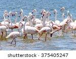 flamingos at the walvish bay in ... | Shutterstock . vector #375405247