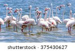 flamingos at the walvish bay in ... | Shutterstock . vector #375430627