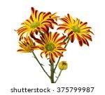 gerbera flower isolated on... | Shutterstock . vector #375799987