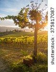 shrubs grapes before harvest | Shutterstock . vector #375817087