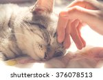 Woman hand petting a cat head ...