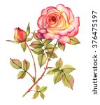 botanical rose flower... | Shutterstock . vector #376475197