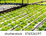 hydroponics method of growing... | Shutterstock . vector #376526197