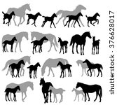 Silhouettes Of Horses   Mares...