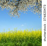 Spring Landscape With Rapeseed...