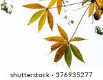 Yellow Tree Leaf On White...