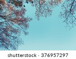 wild himalayan cherry spring... | Shutterstock . vector #376957297