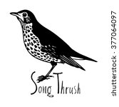 birds collection song thrush... | Shutterstock .eps vector #377064097