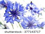 Blue Cornflowers  Isolated On...