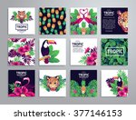 tropical printable set. vector... | Shutterstock .eps vector #377146153