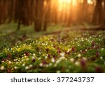 Flowering Green Forest On...