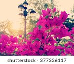 Bougainvillea Flowers Beautifu...