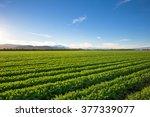 organic farm land crops in...   Shutterstock . vector #377339077