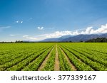 Fertile Agricultural Field Of...