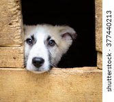 Homeless Puppy In A Shelter Fo...