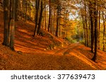 autumn forest colored in orange ... | Shutterstock . vector #377639473