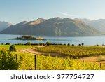 Morning On Vineyard At Lake...