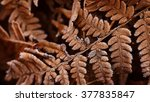 brown autumn fern pattern | Shutterstock . vector #377835847