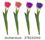 spring flowers. tulips isolated ... | Shutterstock . vector #378231043