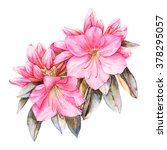 Pink Rhododendron Watercolor...
