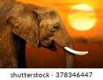 Elephant At African Sunset...