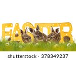easter  three easter bunnies... | Shutterstock . vector #378349237