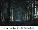 pathway through the  forest | Shutterstock . vector #378676447