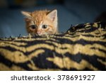 Stock photo ambush red kitten kitten peeking out of hiding 378691927