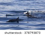 dolphins at black river ... | Shutterstock . vector #378793873