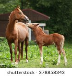 Beautiful Mare With Its Foal...