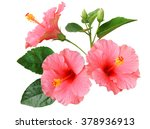 pink hibiscus on white... | Shutterstock . vector #378936913