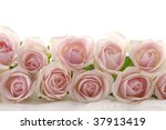 Rose Blossoms On White
