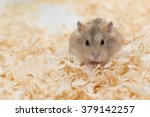 Stock photo photographers want to present performances of hamster 379142257