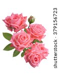 bunch of pink roses isolated on ... | Shutterstock . vector #379156723